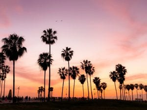 palms-sunset-viviana-rishe