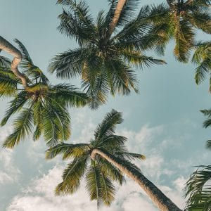 palm_trees_and_blue_sky