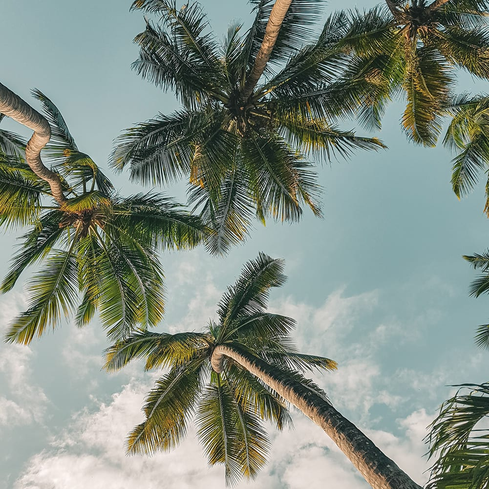 palm_trees_and_blue_sky