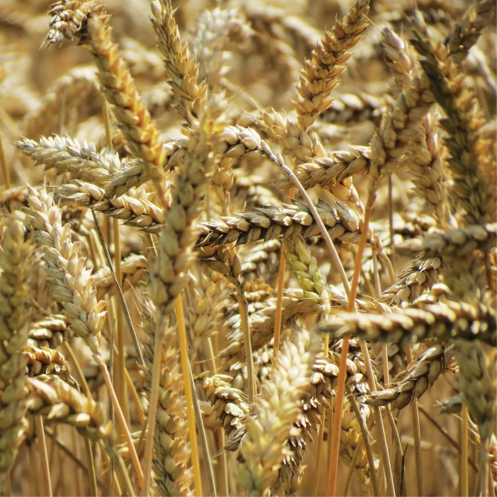 agricultural_product_damages